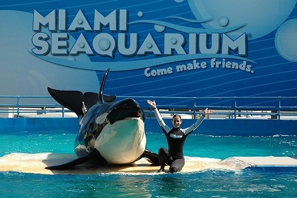 Miami Seaquarium - General Admission