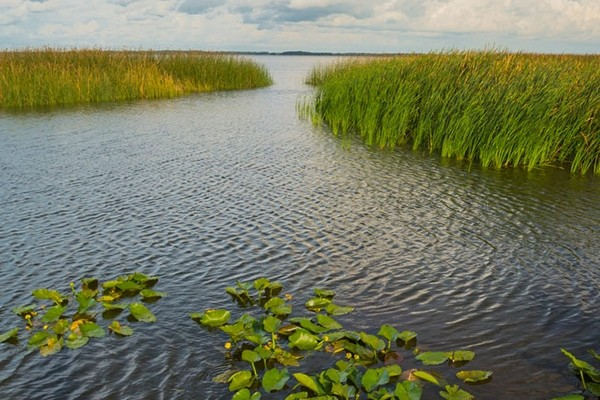 Wild Florida Airboats - 1/2 Day Everglades Package